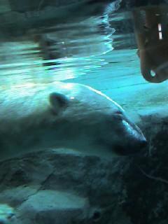 やってきました旭山動物園。